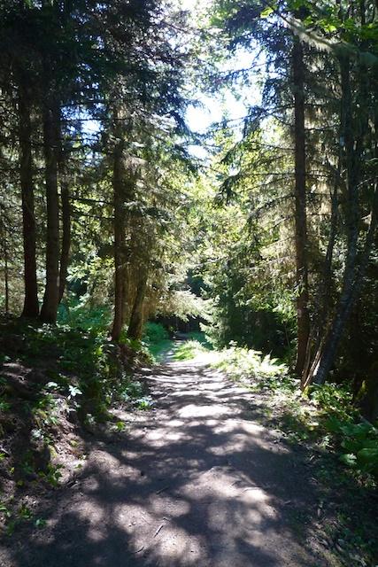La forêt du prarion au dessus de Valmorel