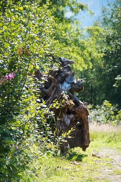 D'étranges créatures peuplent encore les bois.